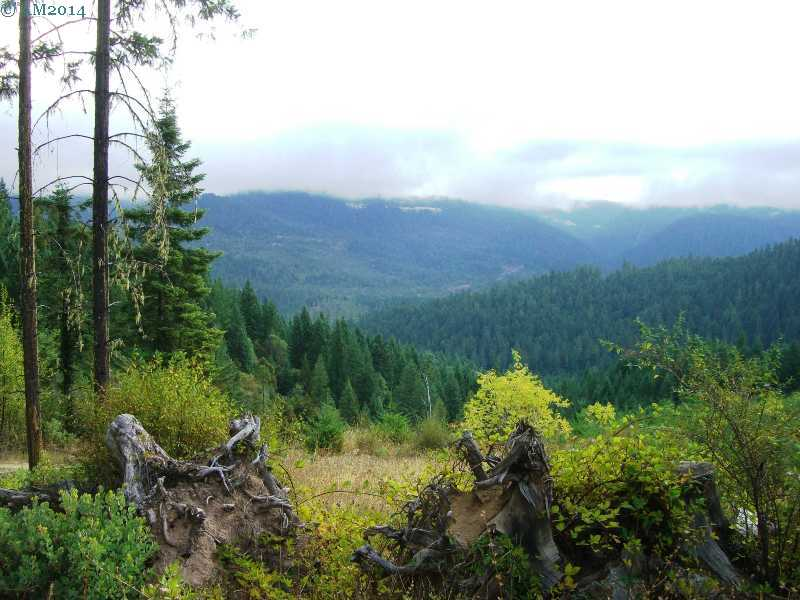 Forested scenery near Drew, Oregon.